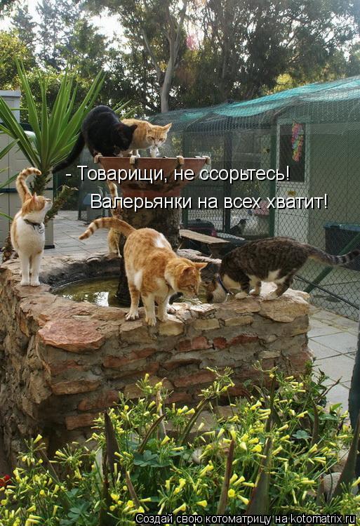 Котоматрица: - Товарищи, не ссорьтесь!  Валерьянки на всех хватит!