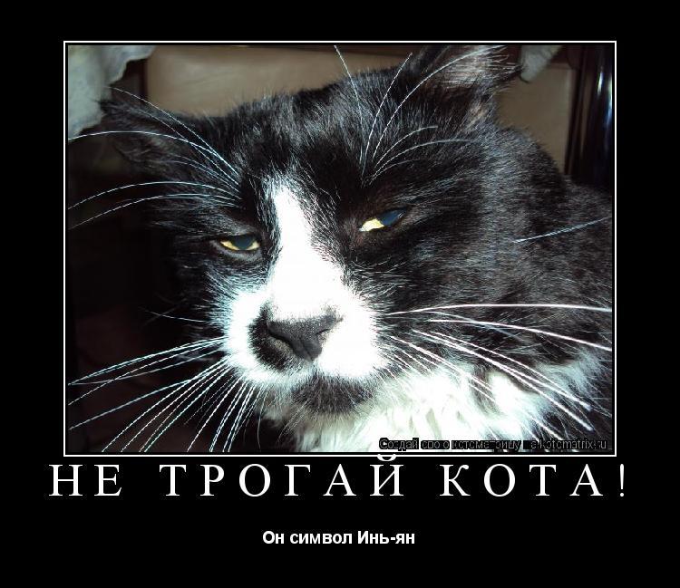 Котоматрица: Не трогай кота! Он символ Инь-ян