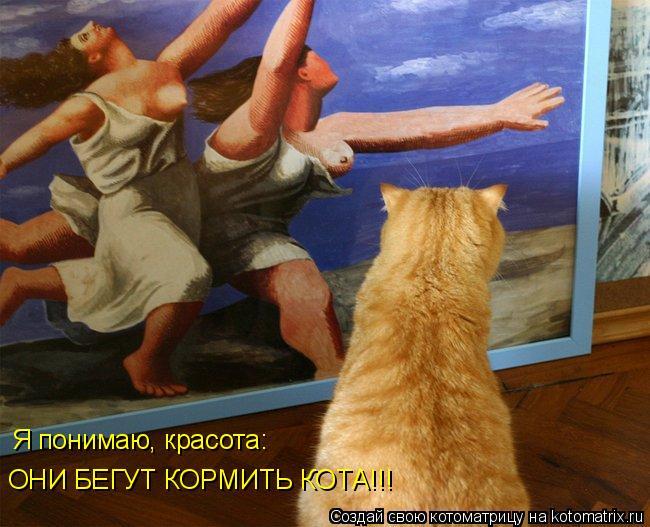Котоматрица: Я понимаю, красота: ОНИ БЕГУТ КОРМИТЬ КОТА!!!