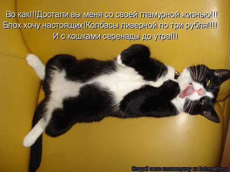 Котоматрица: Во как!!!Достали вы меня со своей гламурной жизнью!!! Блох хочу настоящих!Колбасы ливерной по три рубля!!!! И с кошками серенады до утра!!!