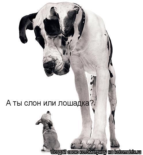 Котоматрица: А ты слон или лошадка?