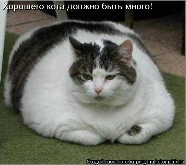Котоматрица: Хорошего кота должно быть много!