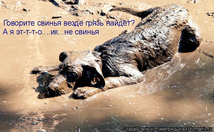 Котоматрица: Говорите свинья везде грязь найдёт? А я эт-т-т-о....ик...не свинья