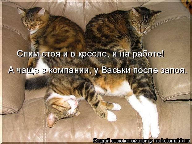 Котоматрица: Спим стоя и в кресле, и на работе! А чаще в компании, у Васьки после запоя.