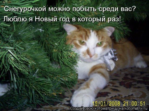 Котоматрица: Снегурочкой можно побыть среди вас? Люблю я Новый год в который раз!