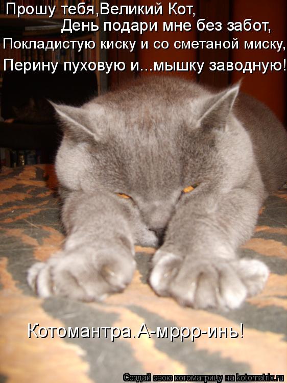 Котоматрица: Прошу тебя,Великий Кот, День подари мне без забот, Покладистую киску и со сметаной миску, Перину пуховую и...мышку заводную! Котомантра.А-мрр