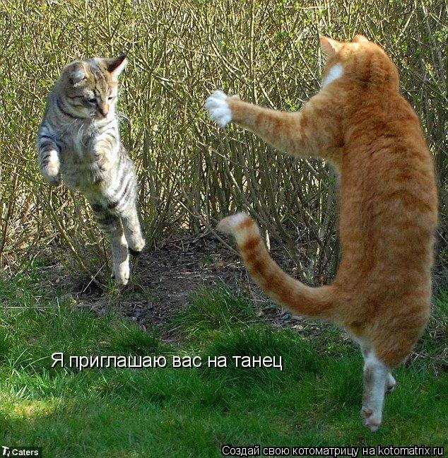 Котоматрица: Я приглашаю вас на танец