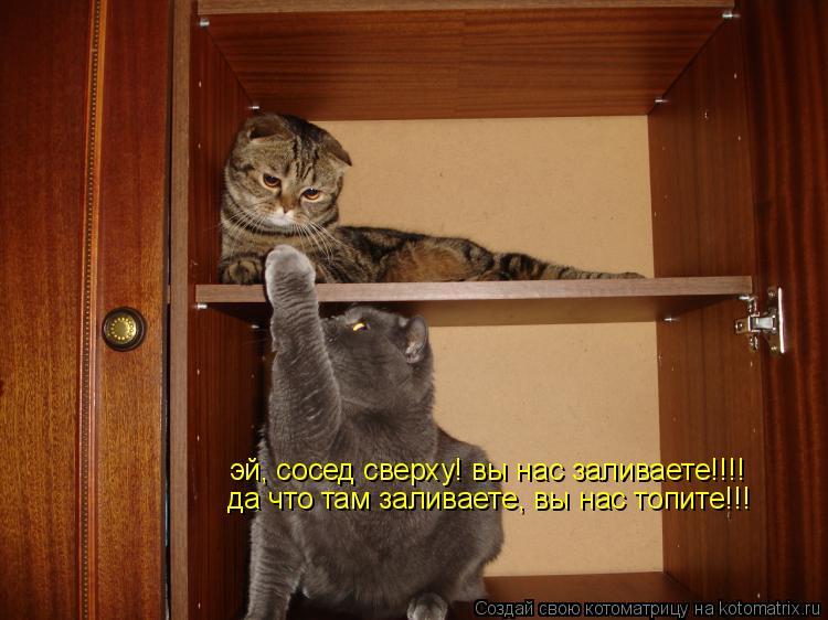 Котоматрица: эй, сосед сверху! вы нас заливаете!!!! да что там заливаете, вы нас топите!!!