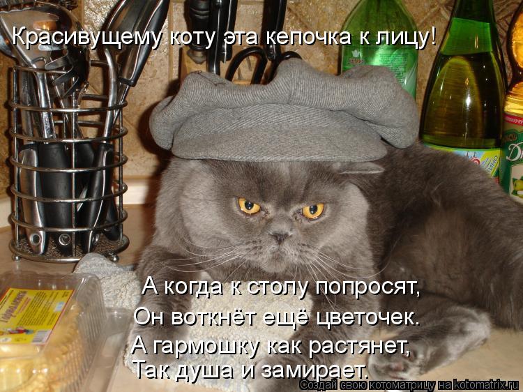 Котоматрица: Красивущему коту эта кепочка к лицу! А когда к столу попросят, Он воткнёт ещё цветочек. А гармошку как растянет, Так душа и замирает.