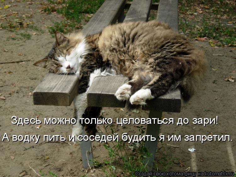 Котоматрица: Здесь можно только целоваться до зари! А водку пить и соседей будить я им запретил.