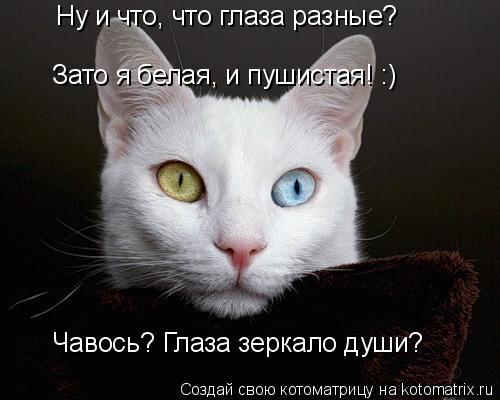 Котоматрица: Ну и что, что глаза разные? Зато я белая, и пушистая! :) Чавось? Глаза зеркало души?
