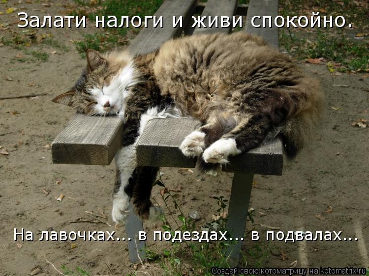 Котоматрица: Залати налоги и живи спокойно. На лавочках... в подездах... в подвалах...