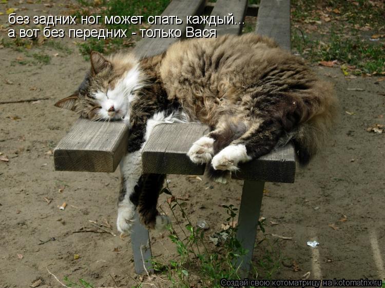 Котоматрица: без задних ног может спать каждый... а вот без передних - только Вася