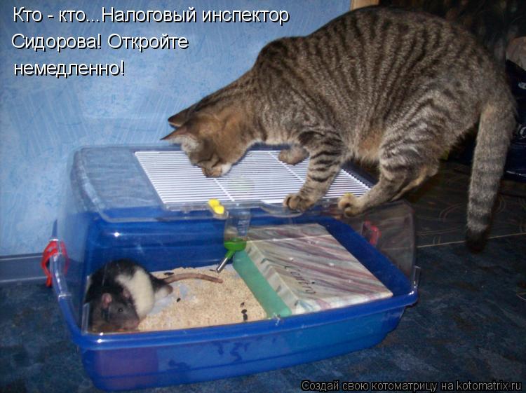 Котоматрица: Кто - кто...Налоговый инспектор  Сидорова! Откройте немедленно!