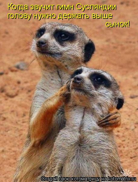 Котоматрица: Когда звучит гимн Сусляндии голову нужно держать выше сынок!