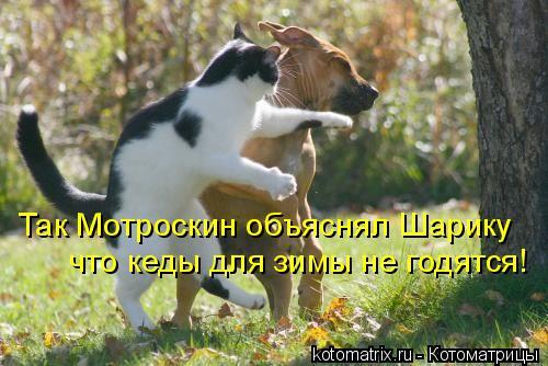 Котоматрица: Так Мотроскин объяснял Шарику что кеды для зимы не годятся!