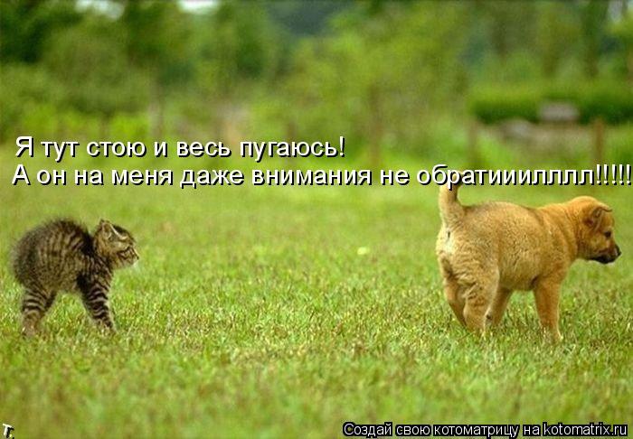 Котоматрица: Я тут стою и весь пугаюсь! А он на меня даже внимания не обратииилллл!!!!!!!!!!