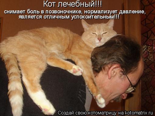 Котоматрица: снимает боль в позвоночнике, нормализует давление, является отличным успокоительным!!! Кот лечебный!!!