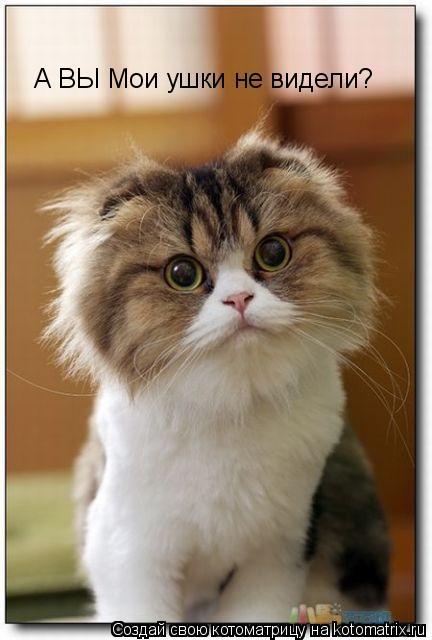 Котоматрица: А ВЫ Мои ушки не видели?