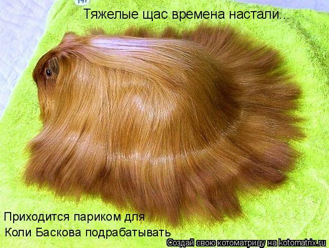 Котоматрица: Тяжелые щас времена настали... Приходится париком для  Коли Баскова подрабатывать