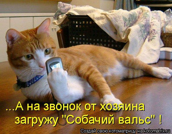 """Котоматрица: ...А на звонок от хозяина  загружу """"Собачий вальс"""" !"""