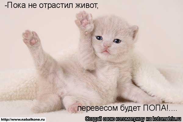 Котоматрица: -Пока не отрастил живот, перевесом будет ПОПА!....