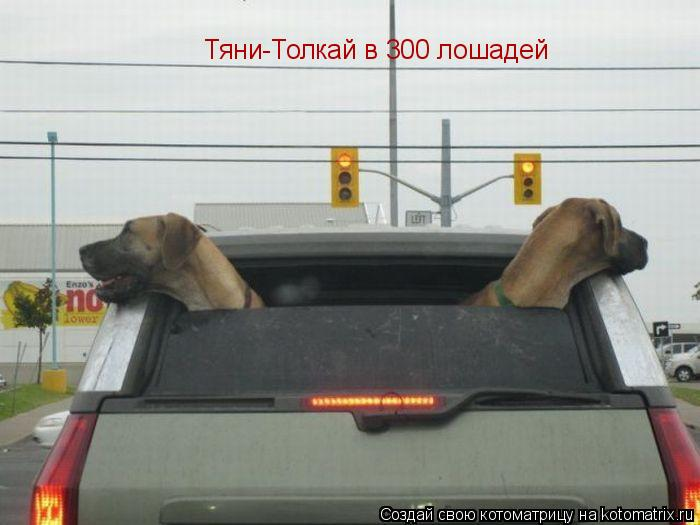 Котоматрица: Тяни-Толкай в 300 лошадей