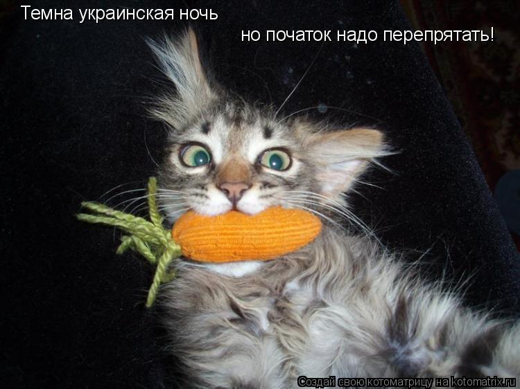 Котоматрица: Темна украинская ночь но початок надо перепрятать!