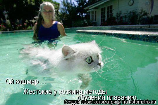 Котоматрица: Ой кошмар.... Жестокие у хозяина методы  обучения плаванию...