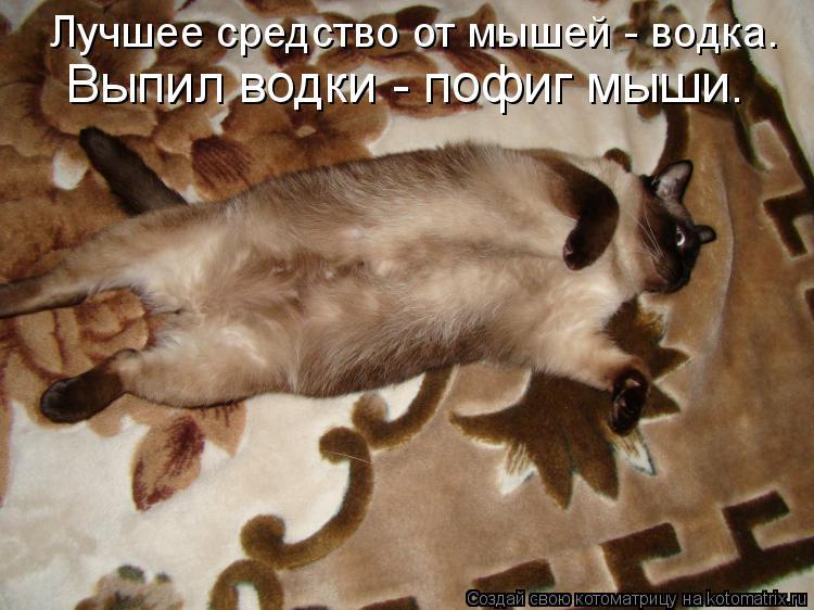 Котоматрица: Лучшее средство от мышей - водка. Выпил водки - пофиг мыши.