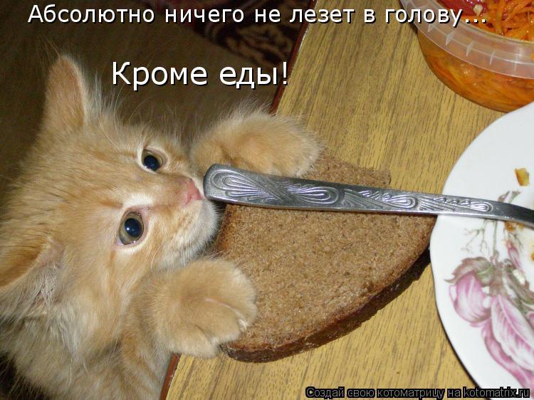 Котоматрица: Абсолютно ничего не лезет в голову...  Кроме еды!