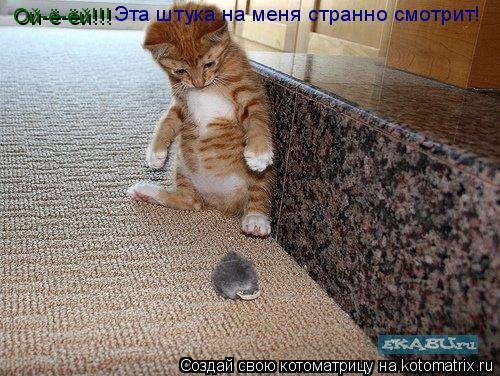 Котоматрица: Эта штука на меня странно смотрит! Ой-ё-ёй!!!
