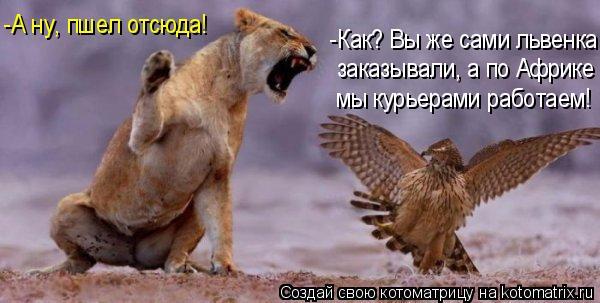 Котоматрица: -А ну, пшел отсюда! -Как? Вы же сами львенка заказывали, а по Африке мы курьерами работаем!