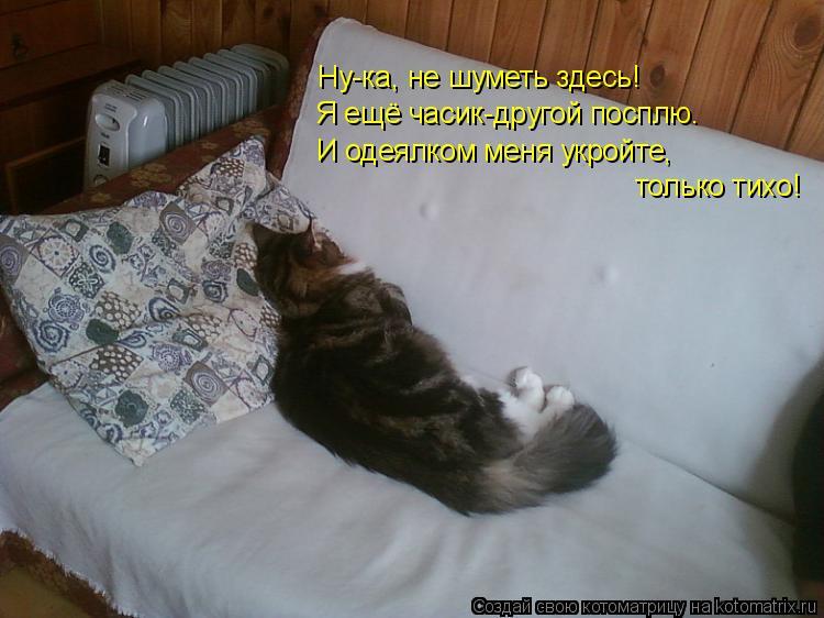 Котоматрица: Ну-ка, не шуметь здесь! Я ещё часик-другой посплю. И одеялком меня укройте, только тихо!
