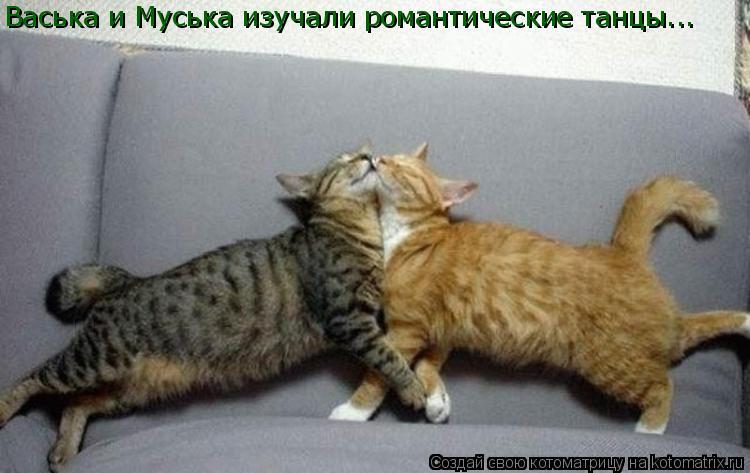 Котоматрица: Васька и Муська изучали романтические танцы...