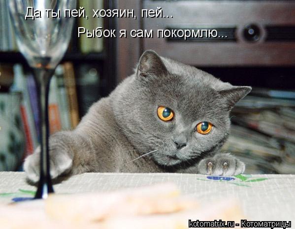 Котоматрица: Да ты пей, хозяин, пей... Рыбок я сам покормлю...