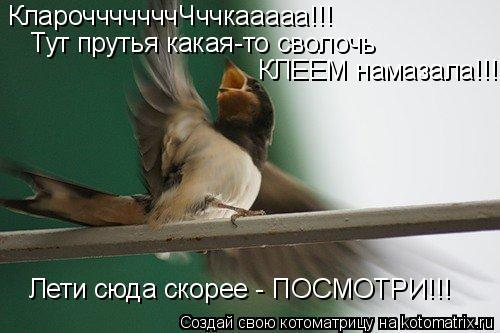Котоматрица: КларочччччччЧччкааааа!!! КЛЕЕМ намазала!!! Лети сюда скорее - ПОСМОТРИ!!! Тут прутья какая-то сволочь
