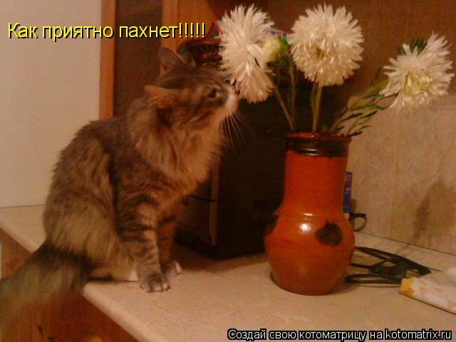 Котоматрица: Как приятно пахнет!!!!!