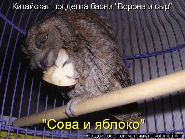 """Котоматрица: """"Сова и яблоко"""" Китайская подделка басни """"Ворона и сыр"""""""