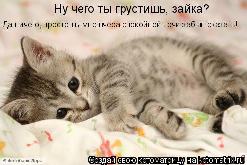 Котоматрица: Ну чего ты грустишь, зайка? Да ничего, просто ты мне вчера спокойной ночи забыл сказать!