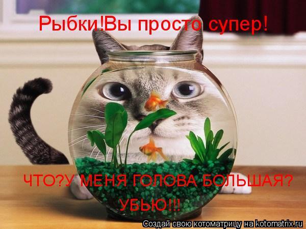 Котоматрица: Рыбки!Вы просто супер! ЧТО?У МЕНЯ ГОЛОВА БОЛЬШАЯ? УБЬЮ!!!