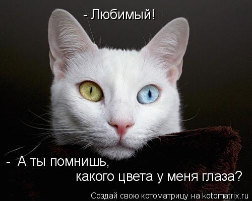 Котоматрица: - Любимый! -  А ты помнишь,  какого цвета у меня глаза?