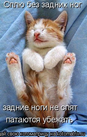 Котоматрица: Сплю без задних ног задние ноги не спят патаются убежать