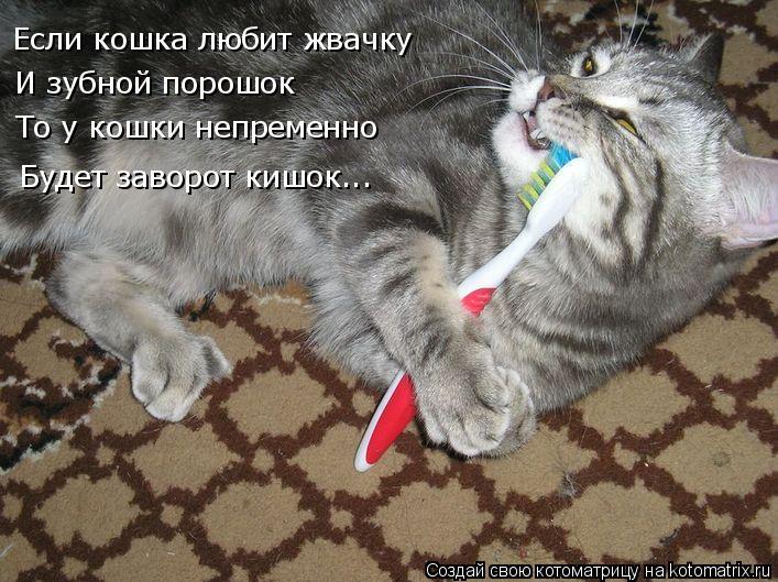 Котоматрица: Если кошка любит жвачку И зубной порошок То у кошки непременно Будет заворот кишок...