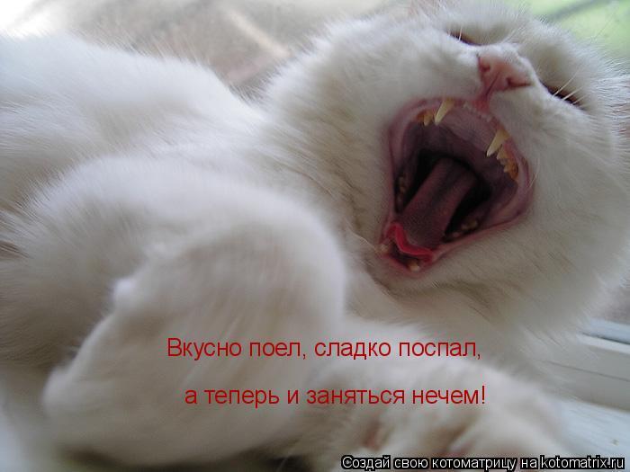 Котоматрица: Вкусно поел, сладко поспал,  а теперь и заняться нечем!