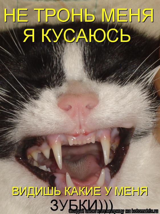 Котоматрица: НЕ ТРОНЬ МЕНЯ Я КУСАЮСЬ ВИДИШЬ КАКИЕ У МЕНЯ ЗУБКИ)))