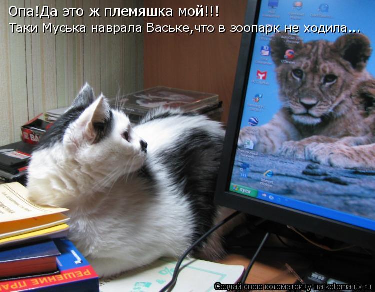 Котоматрица: Опа!Да это ж племяшка мой!!! Таки Муська наврала Ваське,что в зоопарк не ходила...
