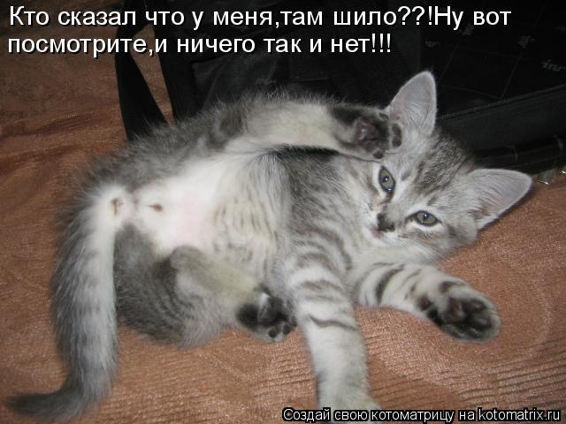 Котоматрица: Кто сказал что у меня,там шило??!Ну вот посмотрите,и ничего так и нет!!!