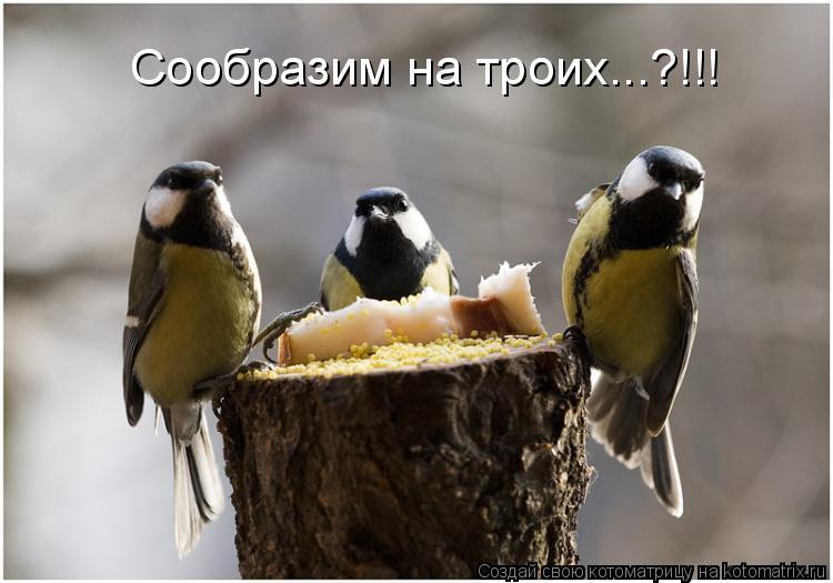 Котоматрица: Сообразим на троих...?!!!