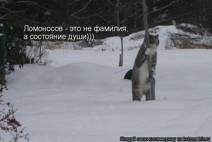 Котоматрица: Ломоносов - это не фамилия, а состояние души)))